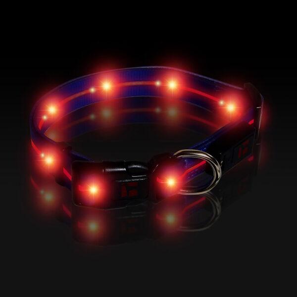LED Adjustable Collar Large Blue, Night