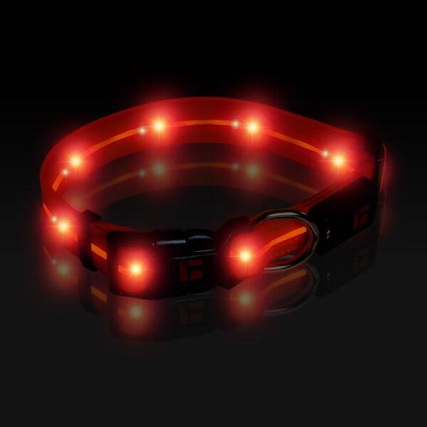 LED Adjustable Collar Large Orange, Night