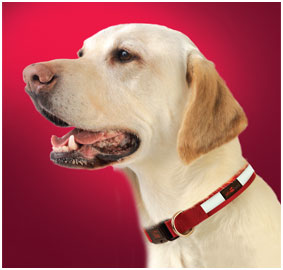 Play Adjustable Collars