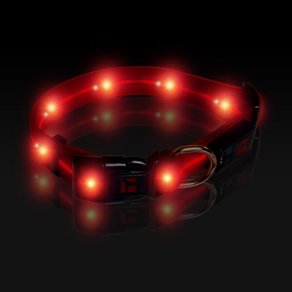 LED Adjustable Collar Large Red, Night