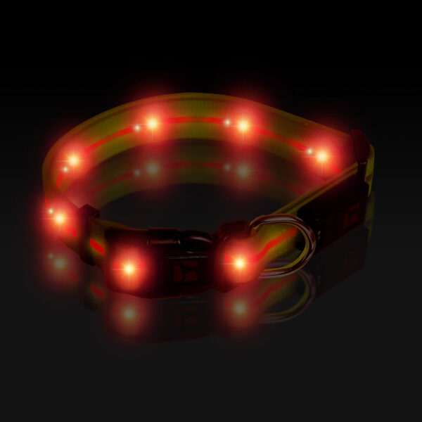 LED Adjustable Collar Large Yellow, Night